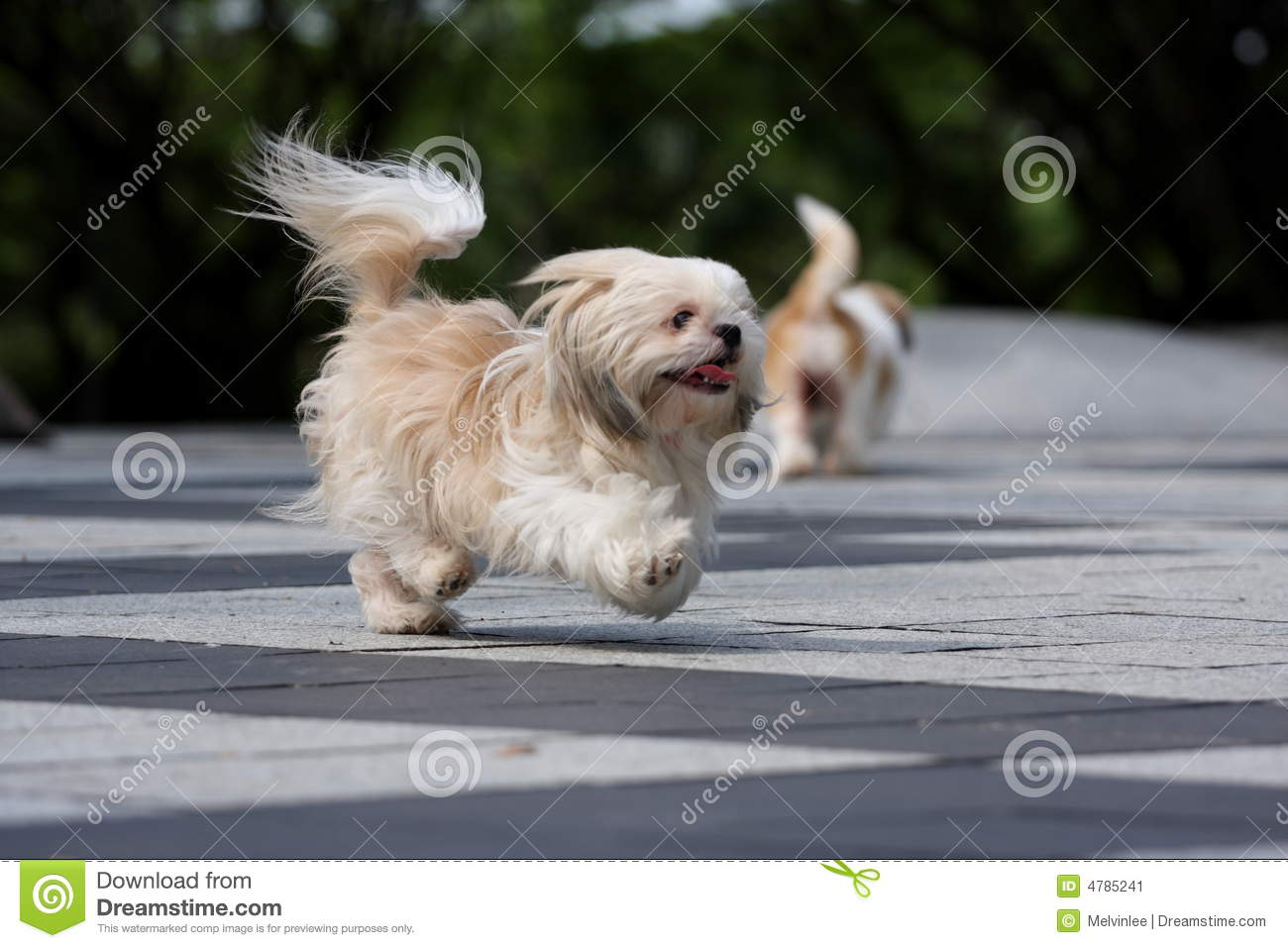 Dog Running Stock Image Image Of Beautiful Fast Mammal 4785241