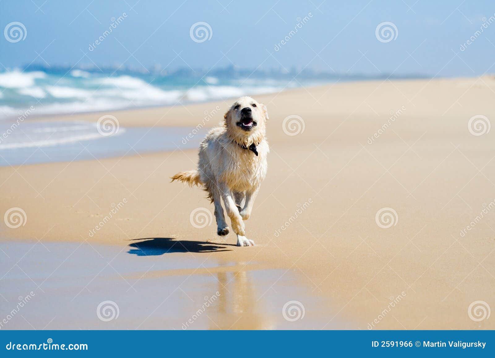 Dog running on a beach