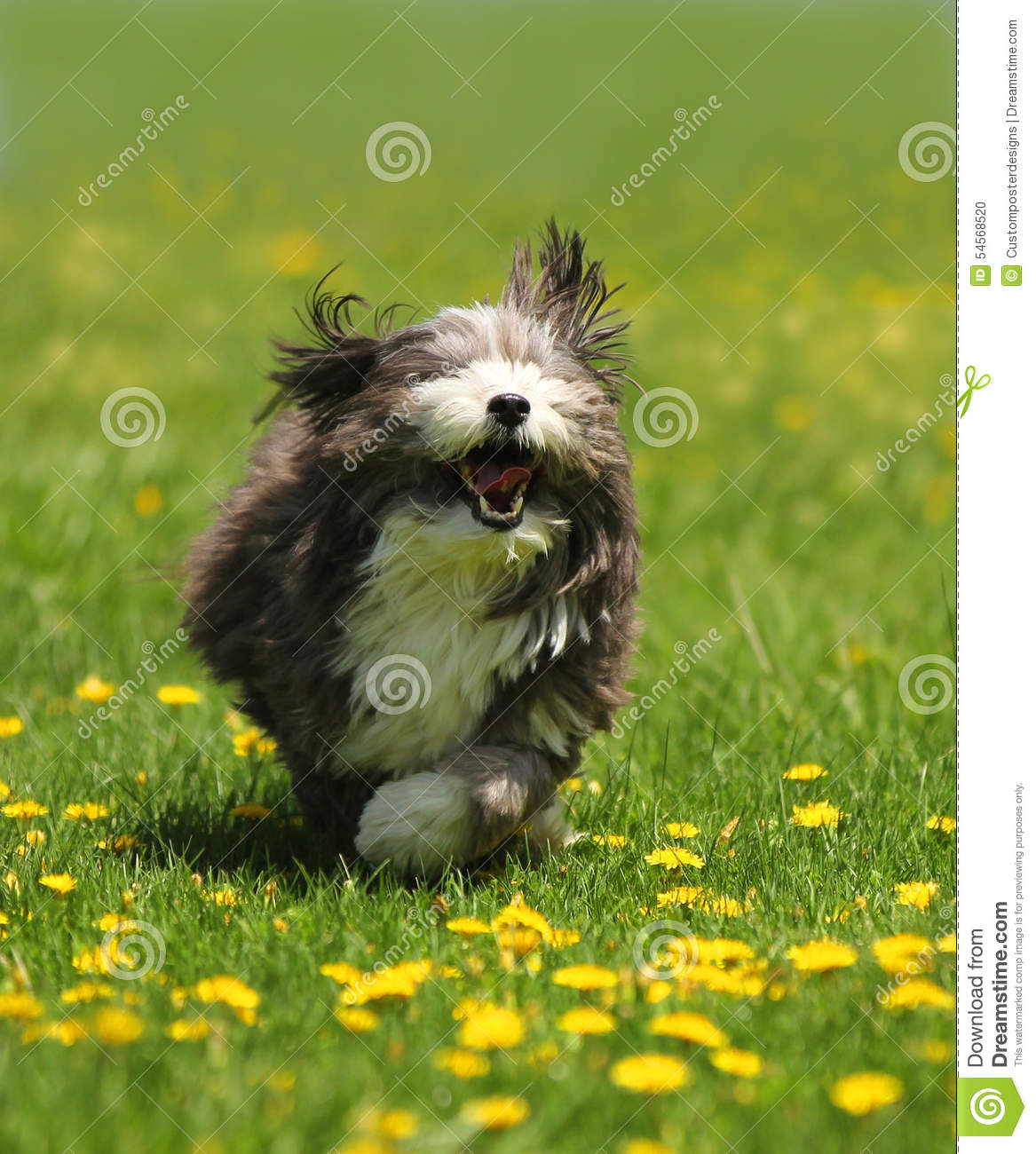 Download A dog running in a field. stock photo. Image of large - 54568520