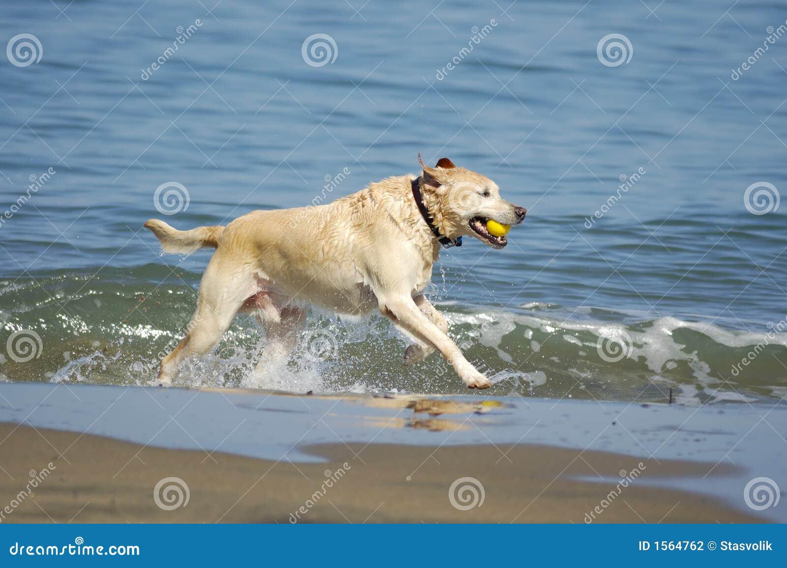Dog running out of San Francisco Bay 3