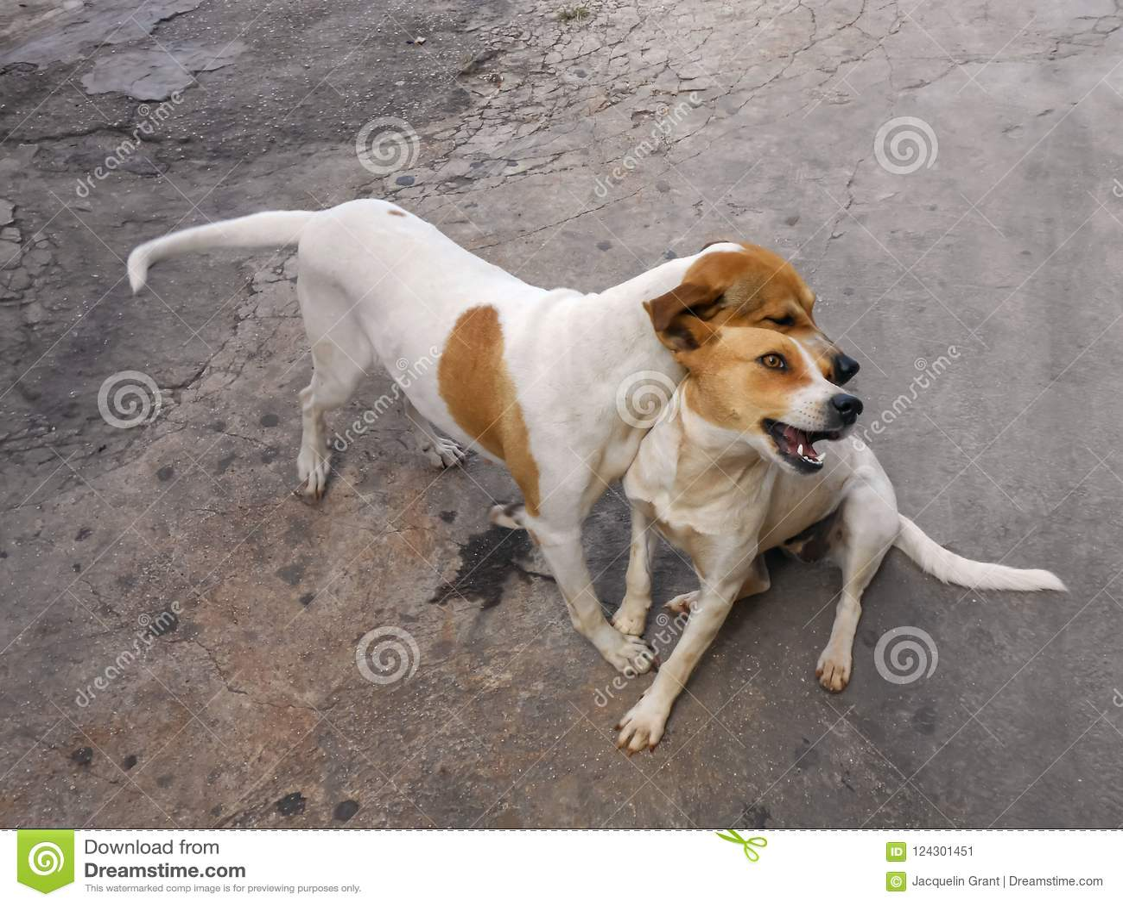 Dog`s Cheek to cheek Friendship