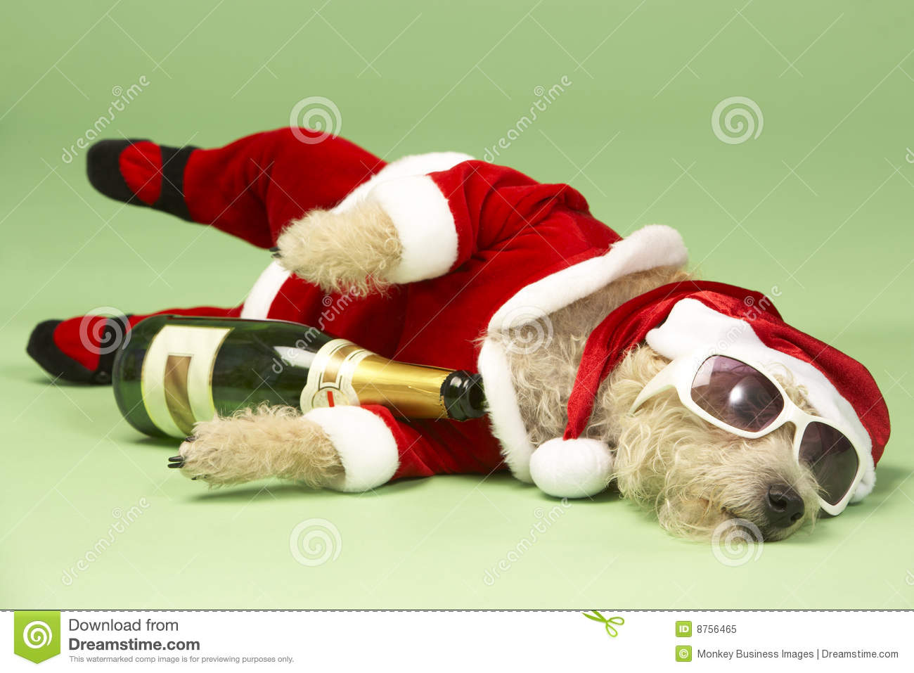 Dog In Santa Costume Stock Image Image Of Bottle Humour