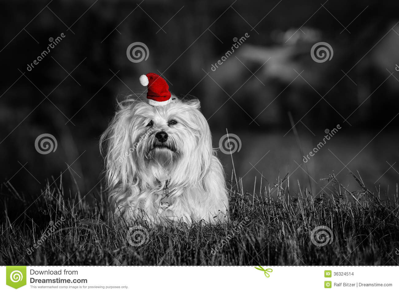 Dog With Santa Hat Color Key Stock Images Image 36324514
