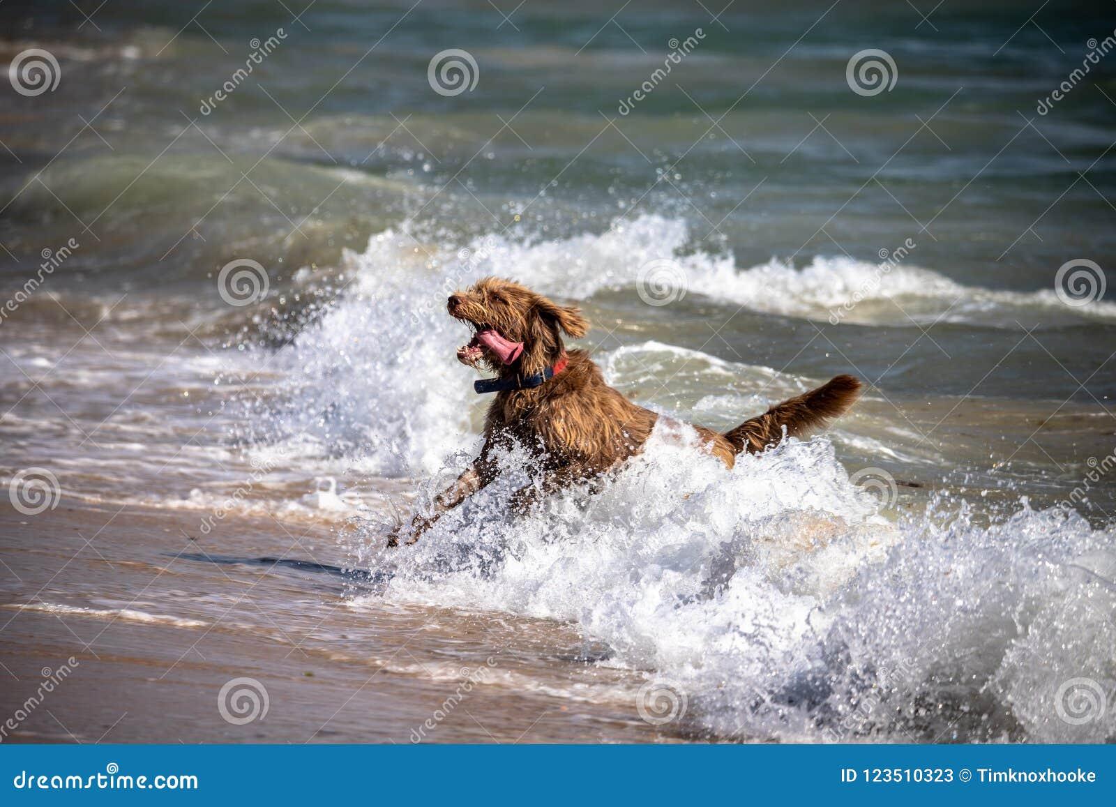 A dog in the sea in Tarifa Spain.