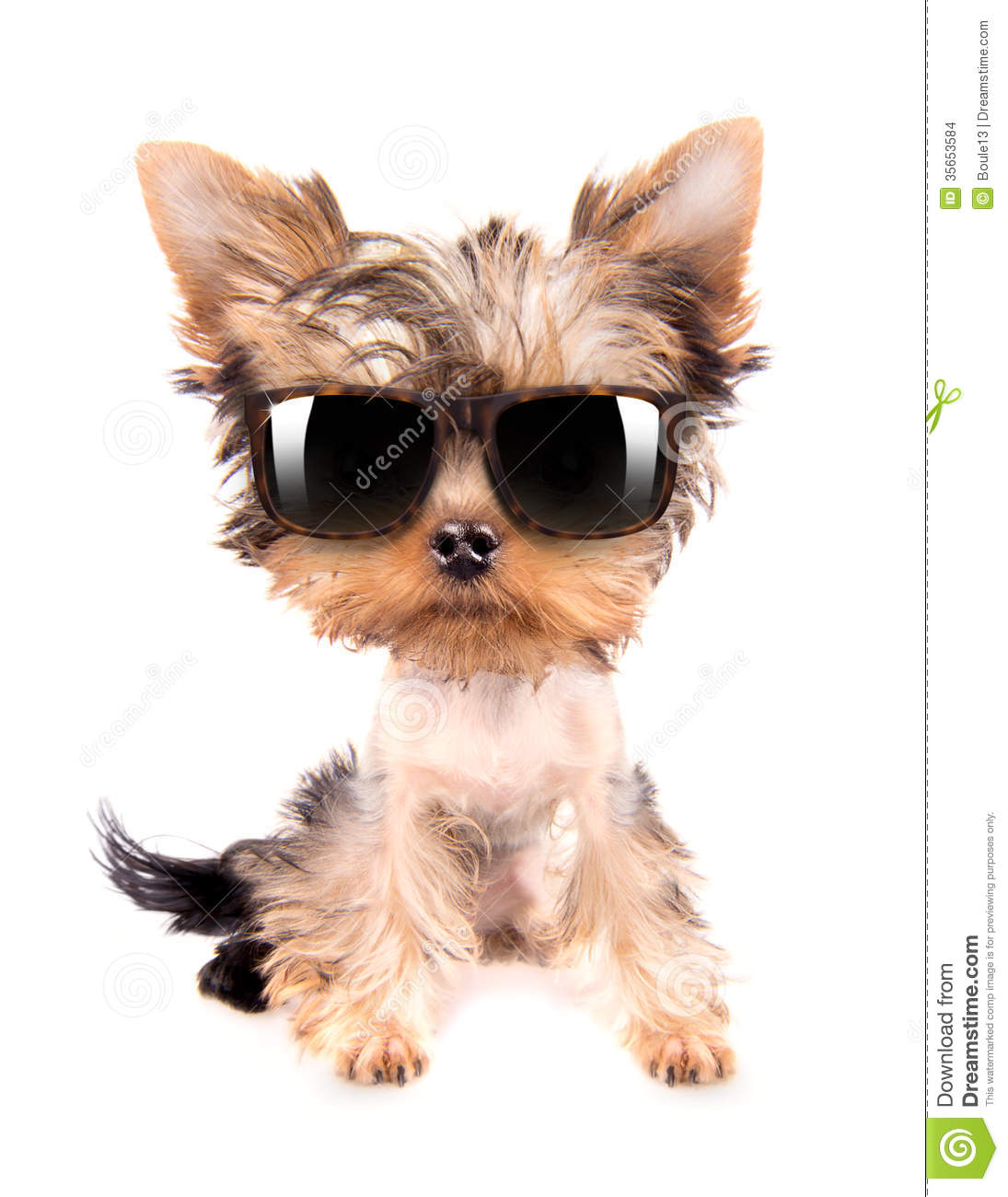 Dog With Shades Stock Images Image 35653584