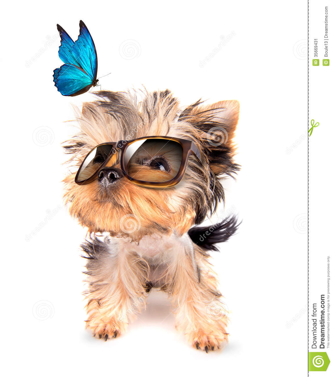 Dog With Shades And Blue Butterfly Stock Image Image