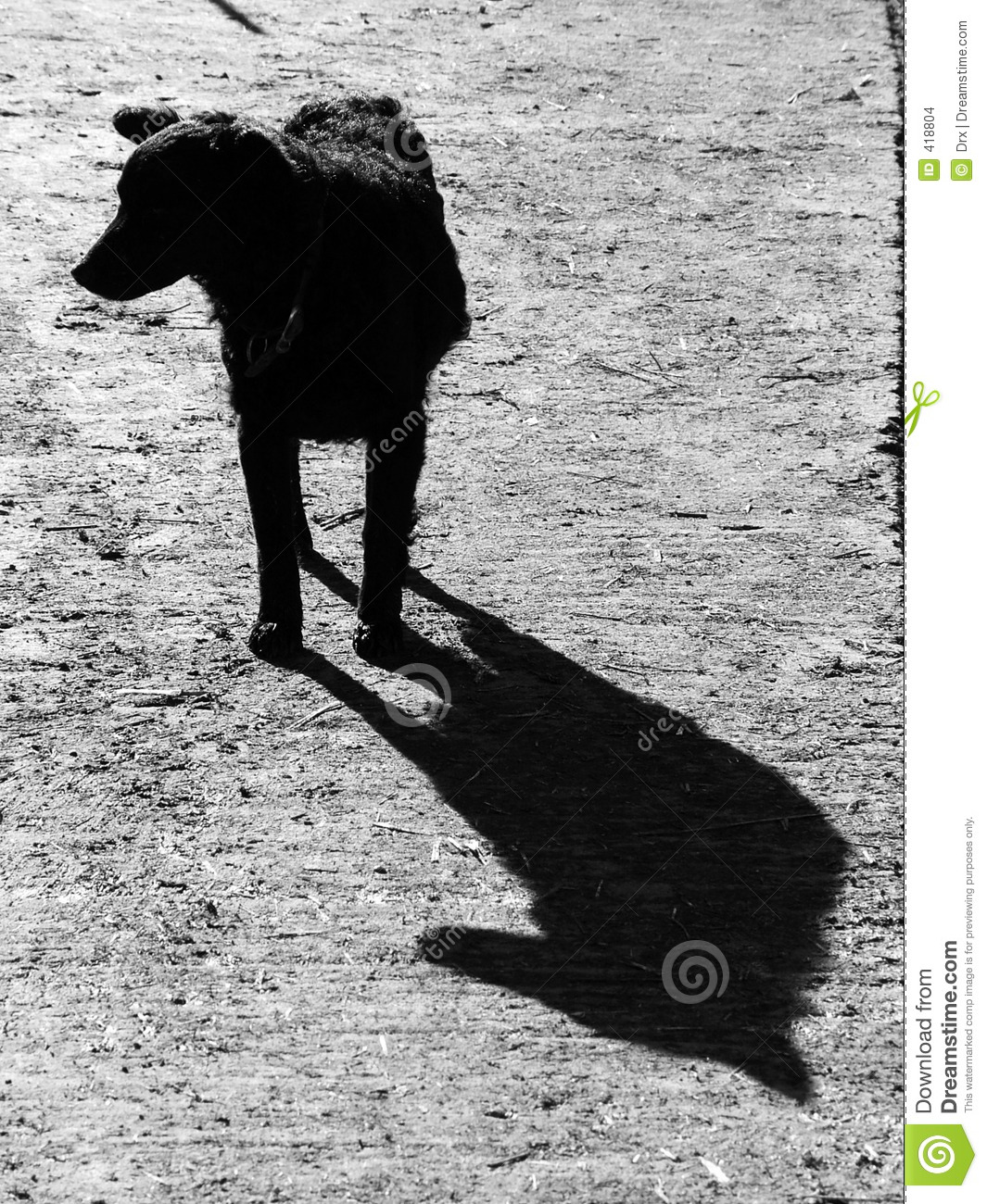 Dog Shadow Stock Images Image 418804