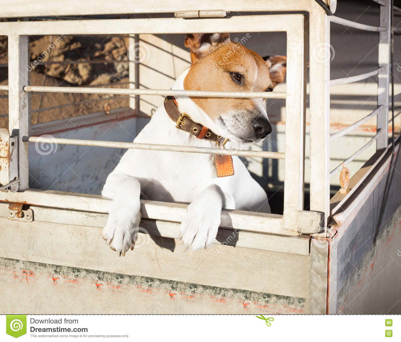 Lonely Sad Pet Dog In Animal Travel Kennel Cage Stock