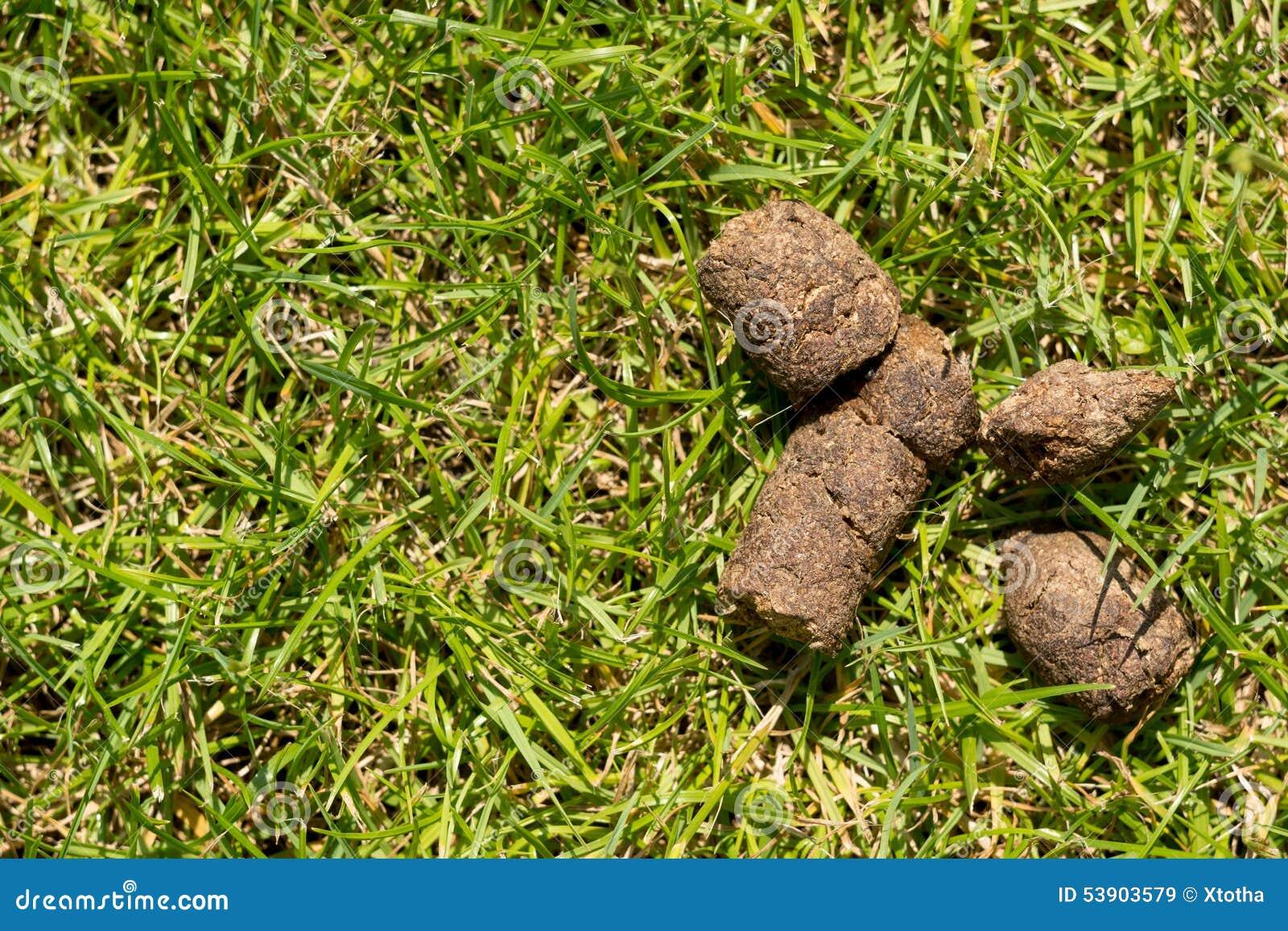 Dog Shit Stock Photo Image 53903579