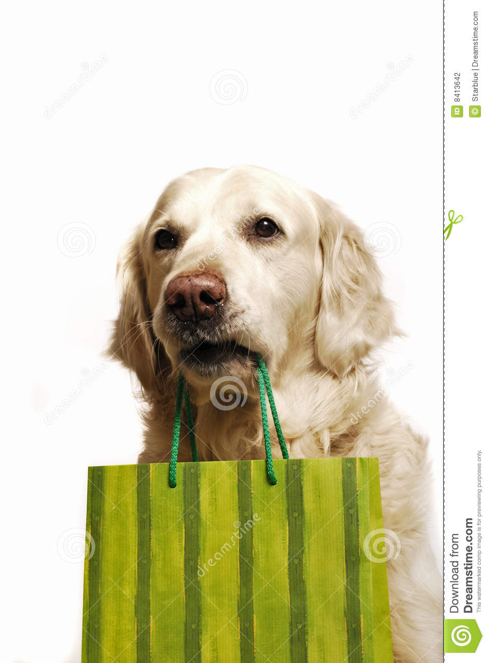 buying a golden retriever dog shopping stock photo image of background humor 9841