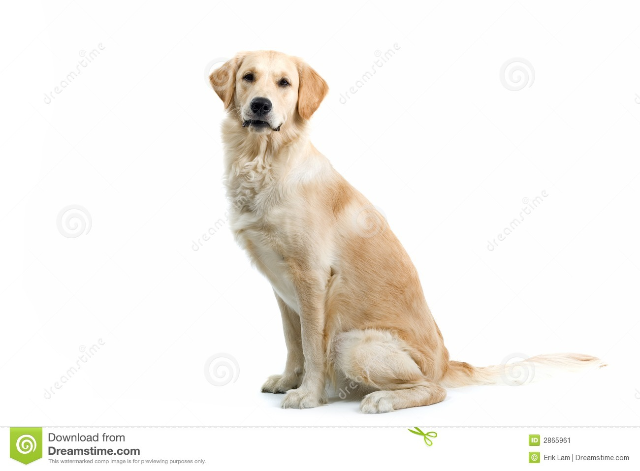 Dog Sitting Stock Image - Image: 2865961