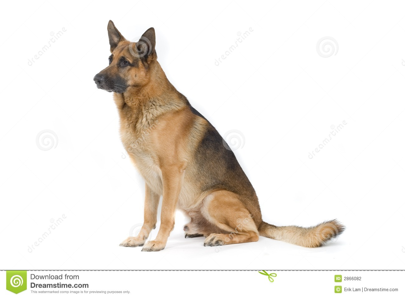 Dog sitting stock photography image 2866082 for Be a dog sitter