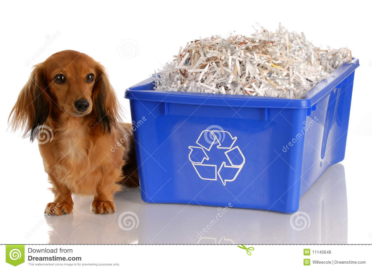 dog sitting beside recycle bin royalty free stock photos