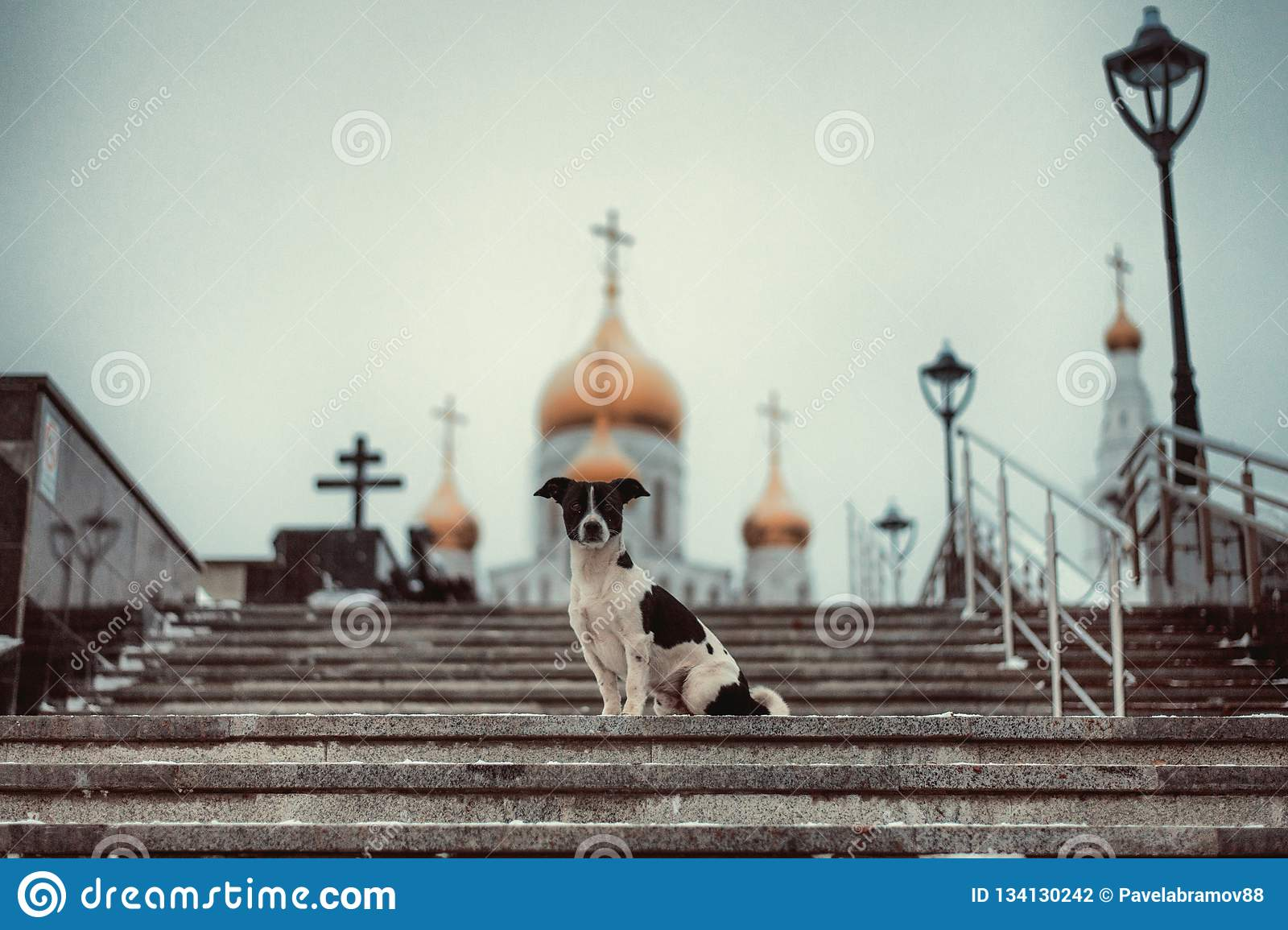 Dog sitting on the steps against the Church