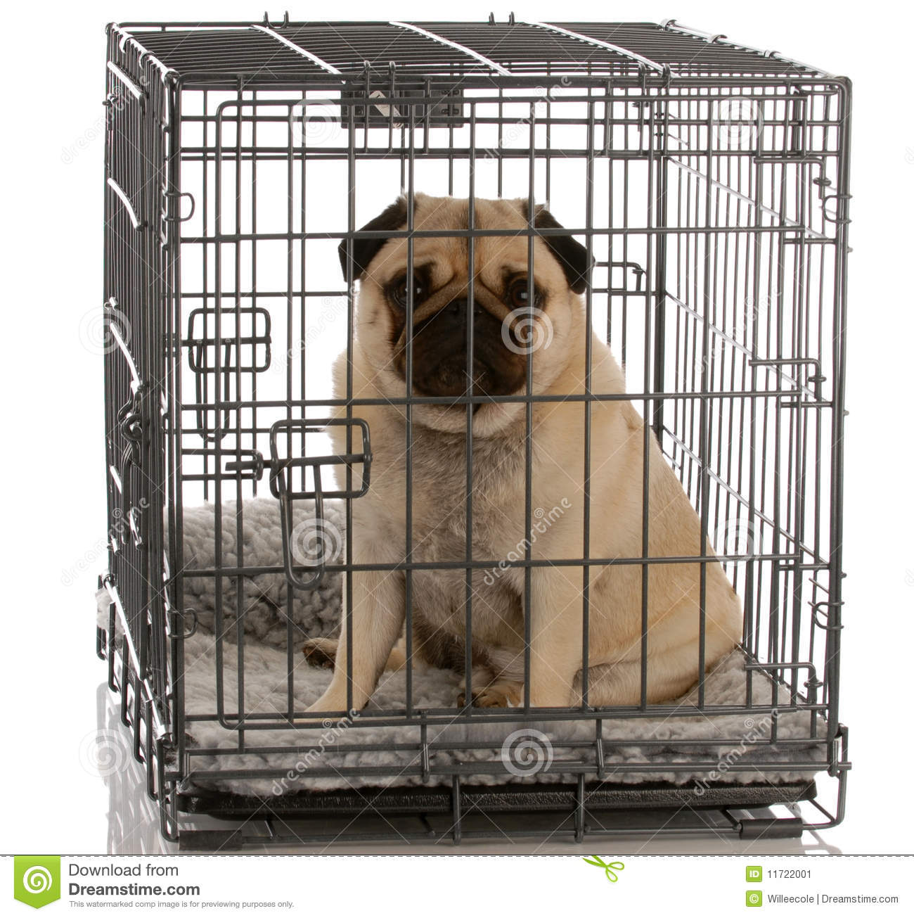 Dog Sitting In Wire Crate Stock Image - Image: 11722001