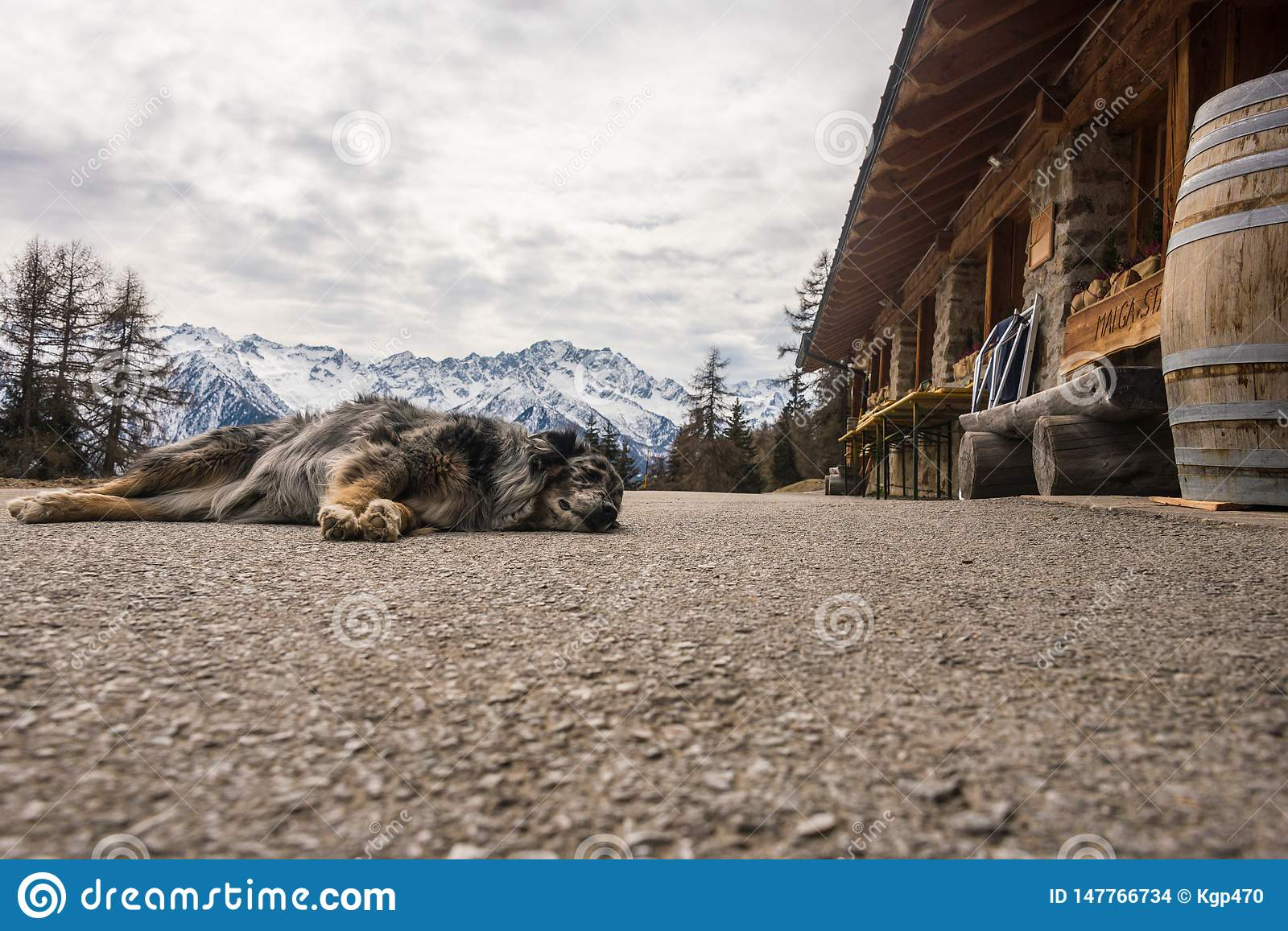 Dog sleeping on mountain road. Snow-capped mountains at the background.