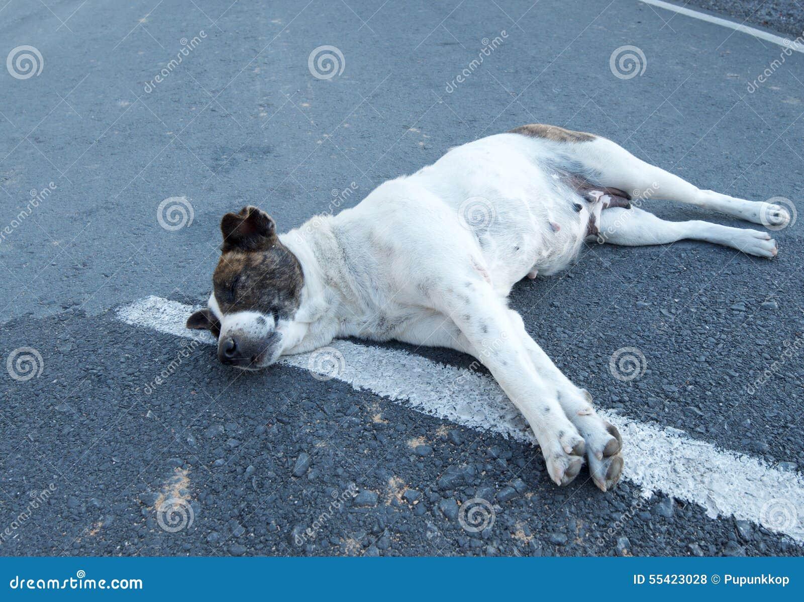dog photo road - photo #46