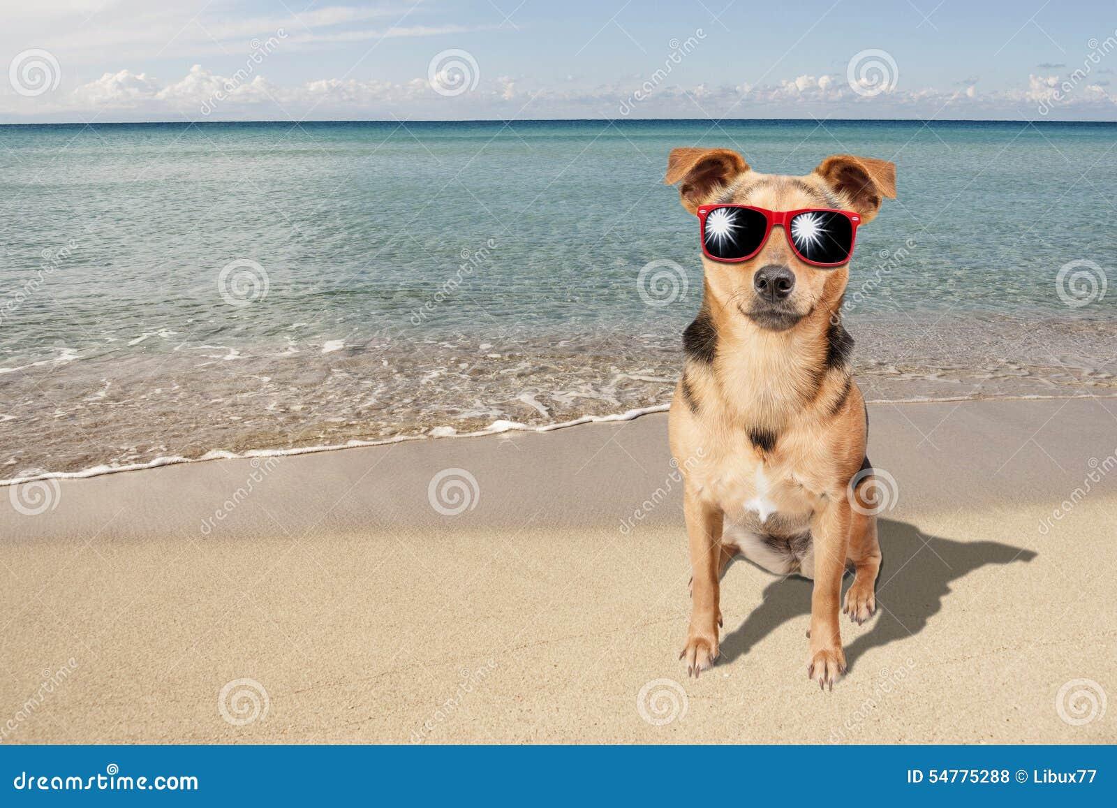 Dog Small Fawn Beach Sea Sunglasses