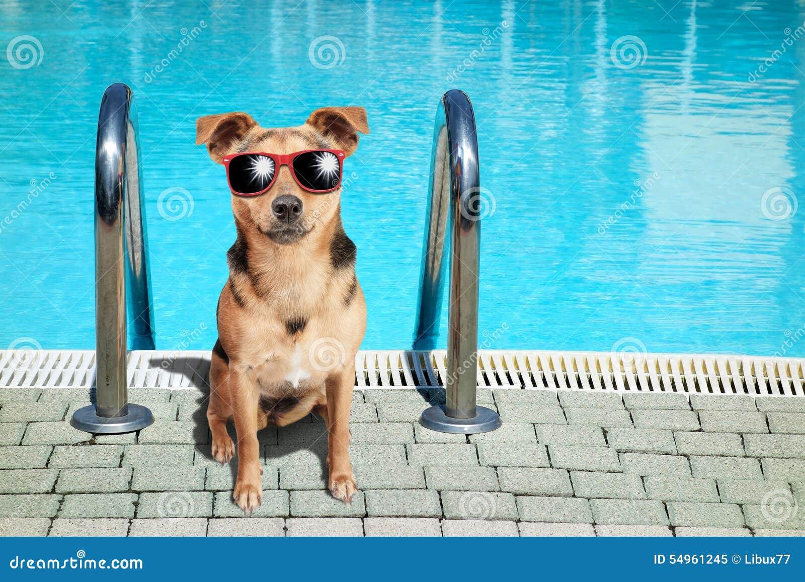 Dog Small Fawn Swimming Pool Sunglasses