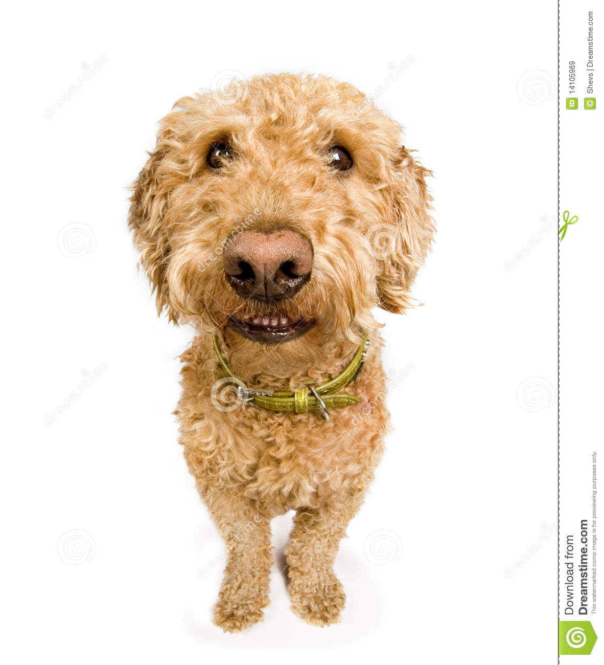 Dog with a smile