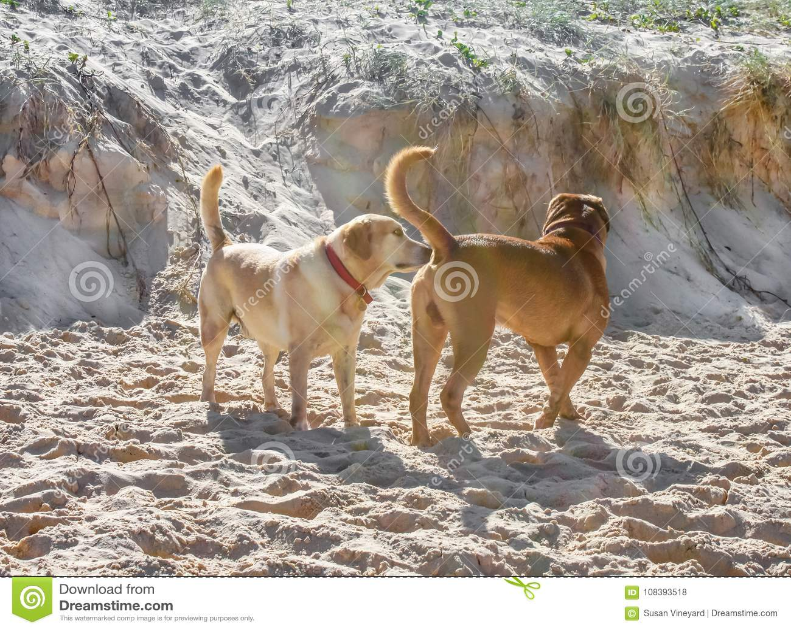 Congratulate, this dog sniffs girls ass prompt reply