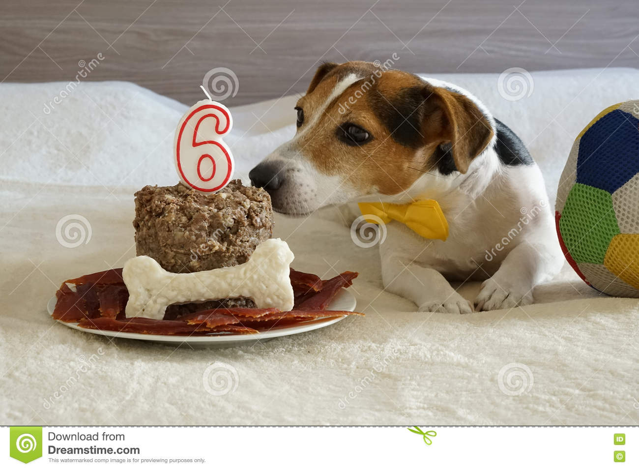 Swell Jack Russell Dog Sniffing Cake On His Sixth Birthday Stock Photo Funny Birthday Cards Online Ioscodamsfinfo