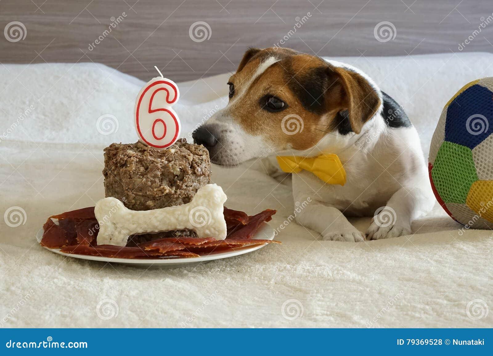 Amazing Jack Russell Dog Sniffing Cake On His Sixth Birthday Stock Photo Funny Birthday Cards Online Elaedamsfinfo