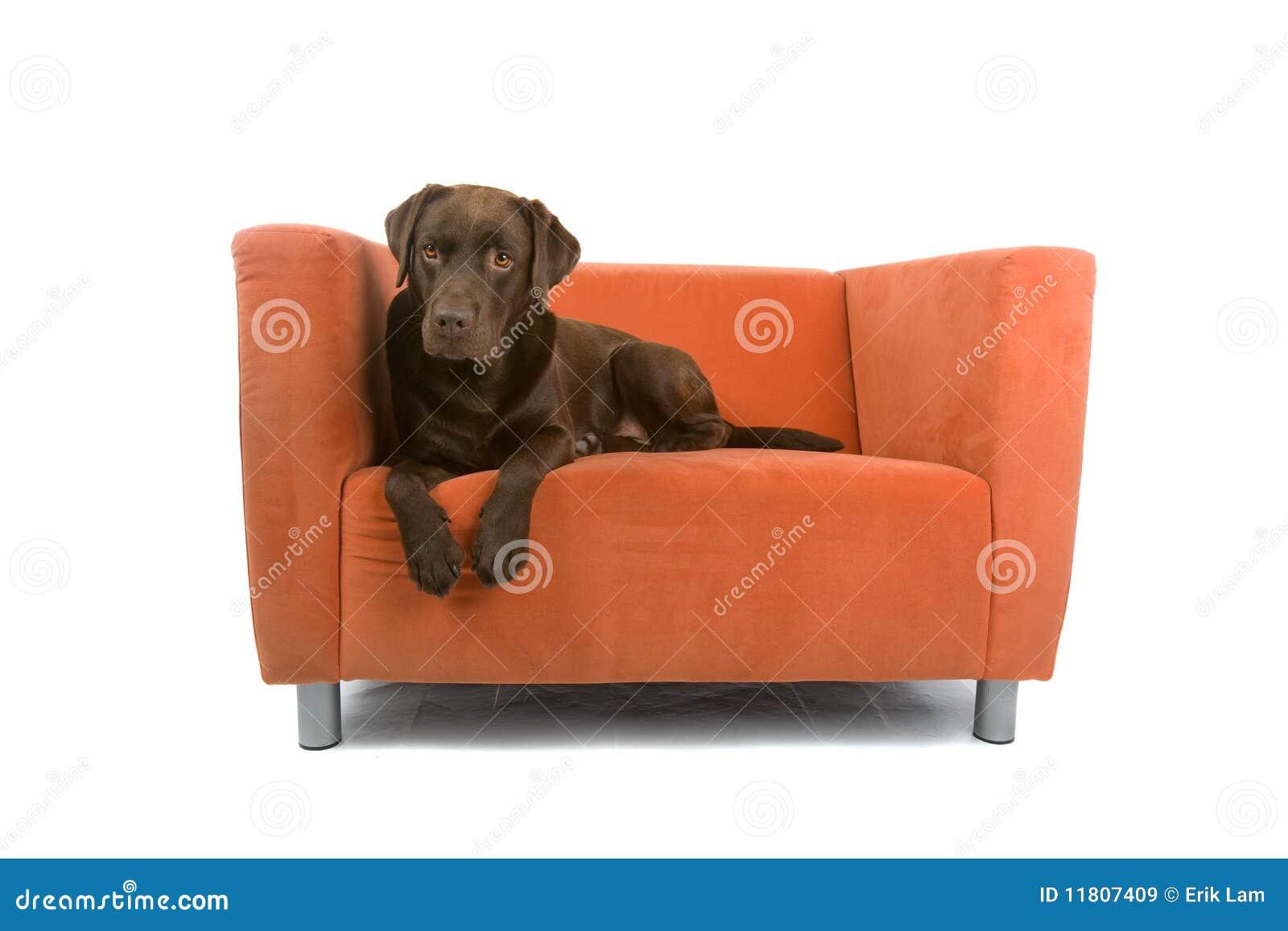 Dog On Sofa Royalty Free Stock Images Image 11807409