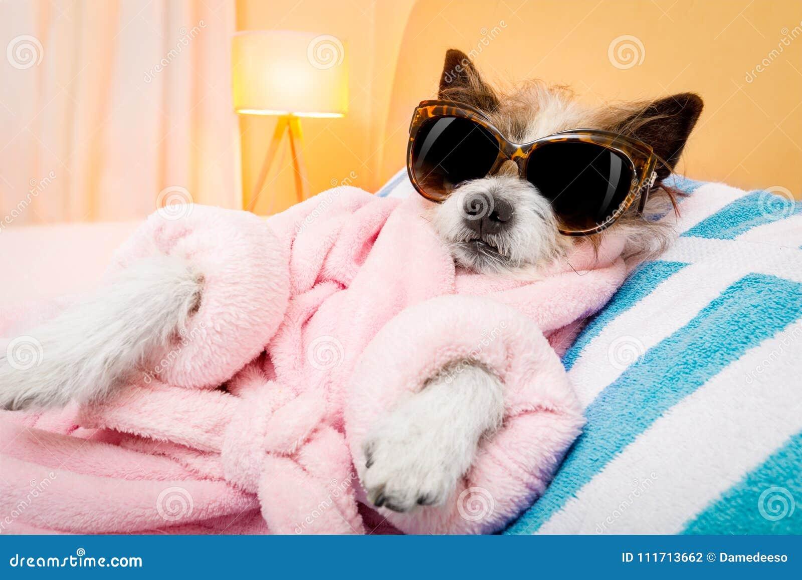 Dog spa σαλόνι wellness