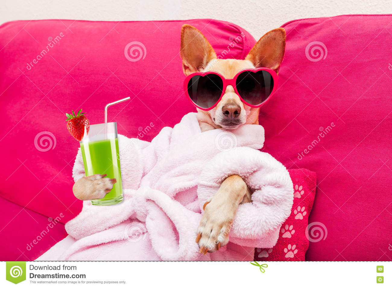 dog-spa-wellness-chihuahua-relaxing-lyin