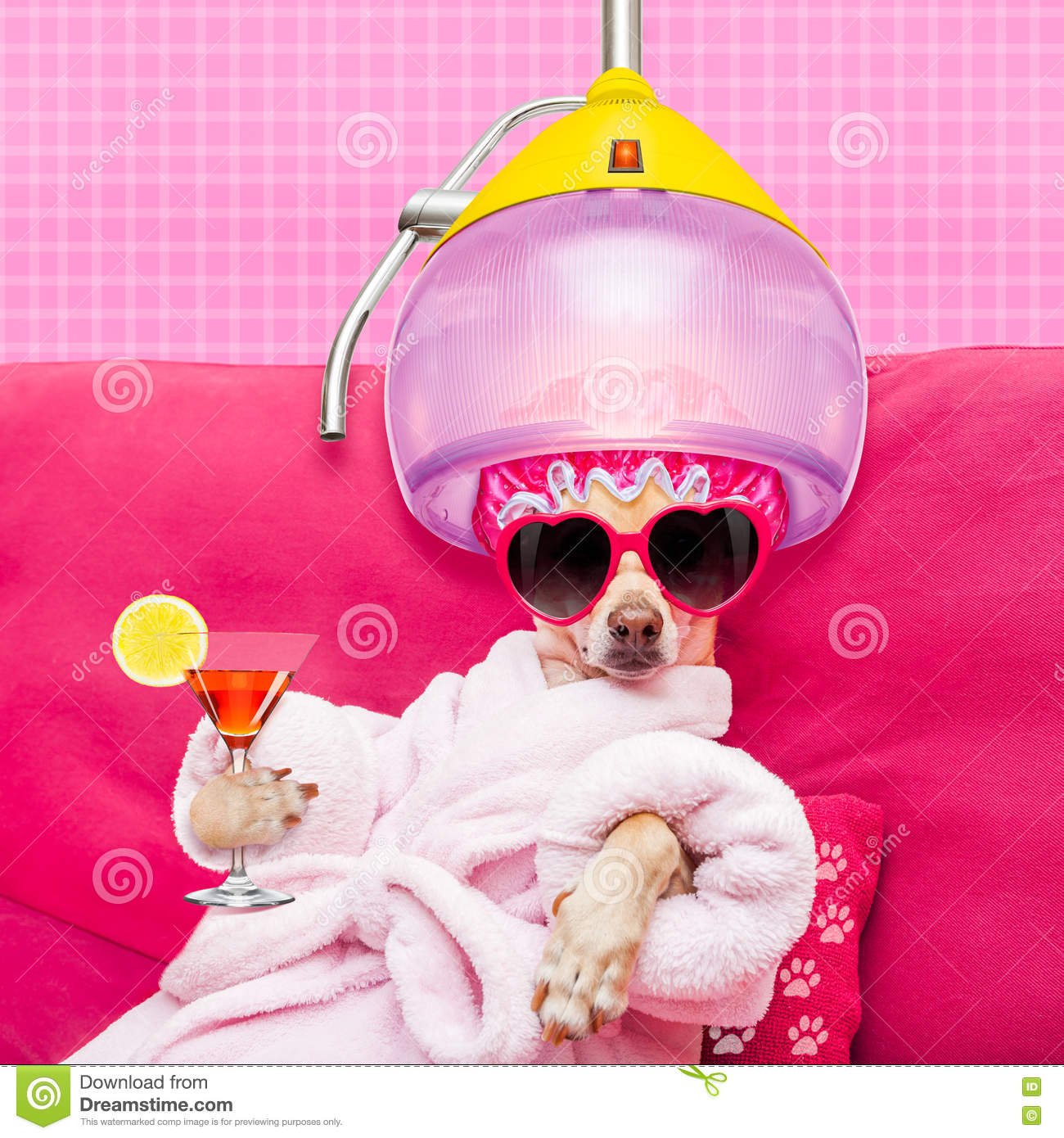 dog spa wellness stock photo   image 73801985