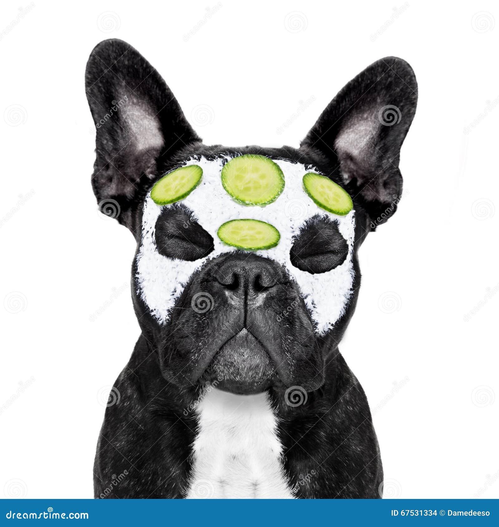 Dog Spa Wellness Stock Photo - Image: 67531334 Relaxing Dog Music Audio