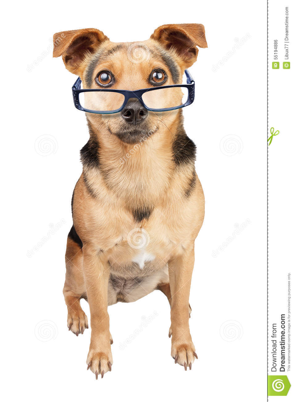 Dog Spectacles Small Fawn Isolated