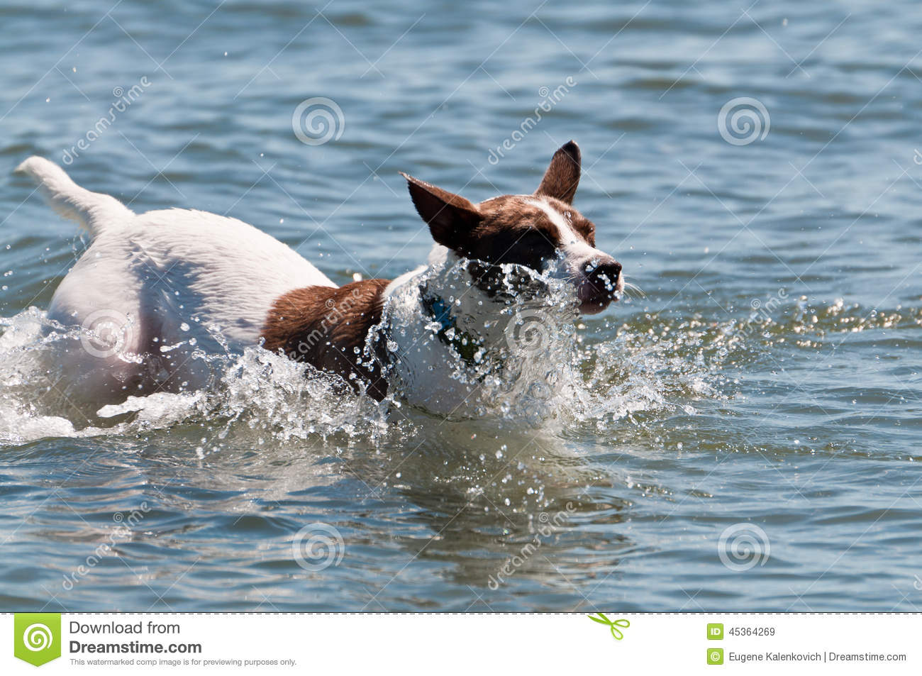 Water Running From Dog S Nose