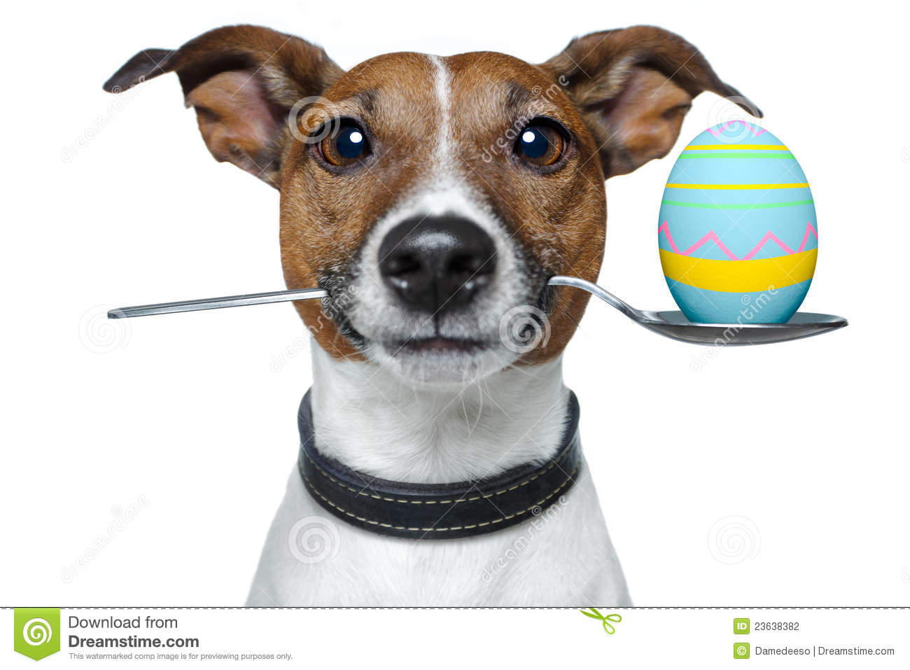 dog with spoon and easter egg stock photography   image