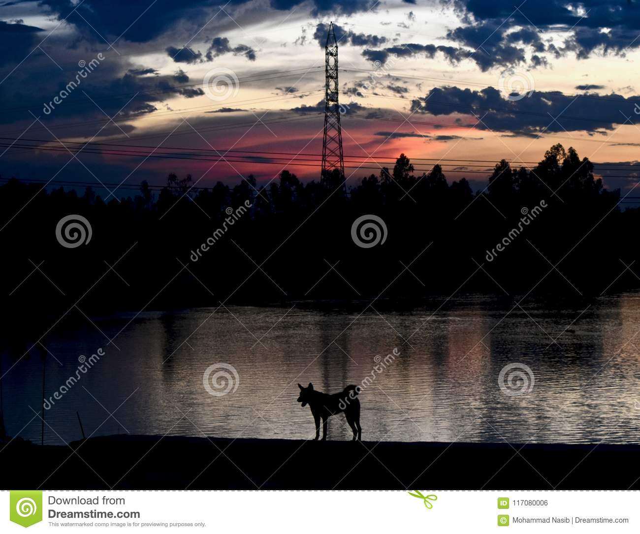 Download A Dog Is Standing Around A River Bank Area In The Afternoon Stock Photo - Image of beautiful, reflection: 117080006