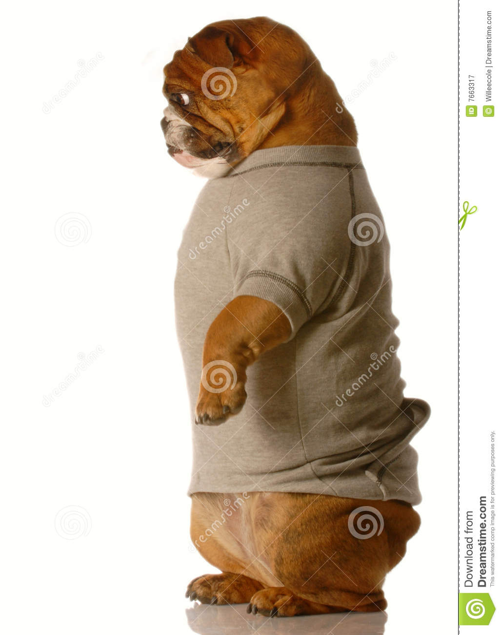 Dog standing up royalty free stock photography image 7663317