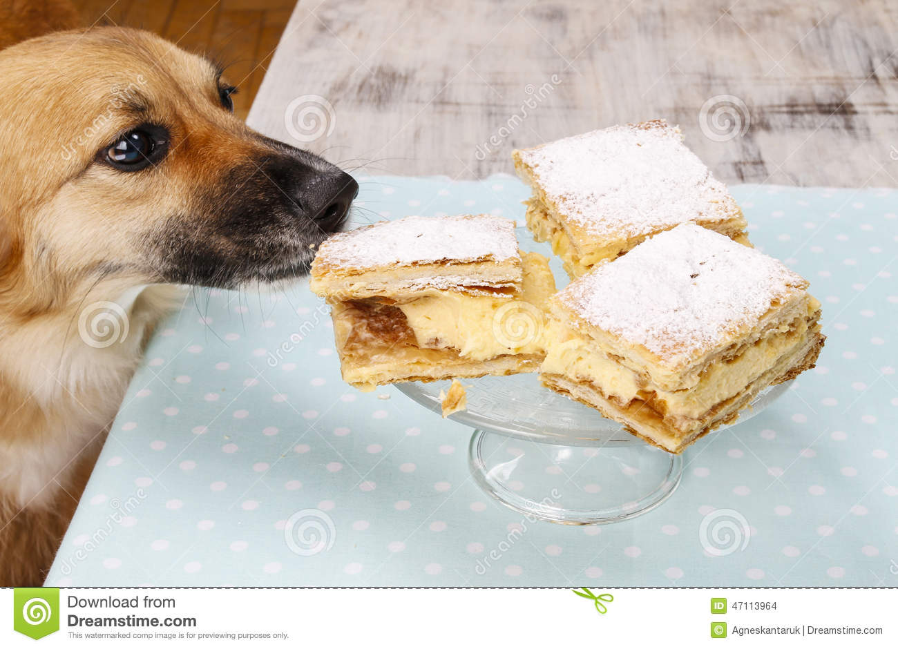Dog stealing birthday cake - photo#39