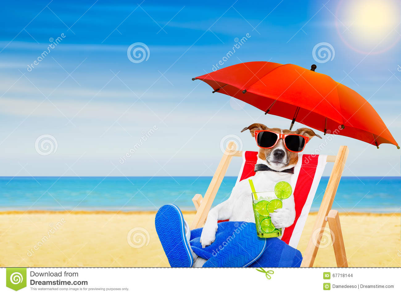 Dog Summer Beach Chair Stock Image