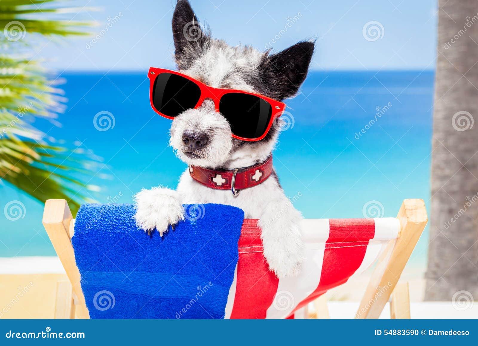 Dog Summer Holiday Vacation Stock Photo - Image: 54883590 Relaxing Dog Music Audio