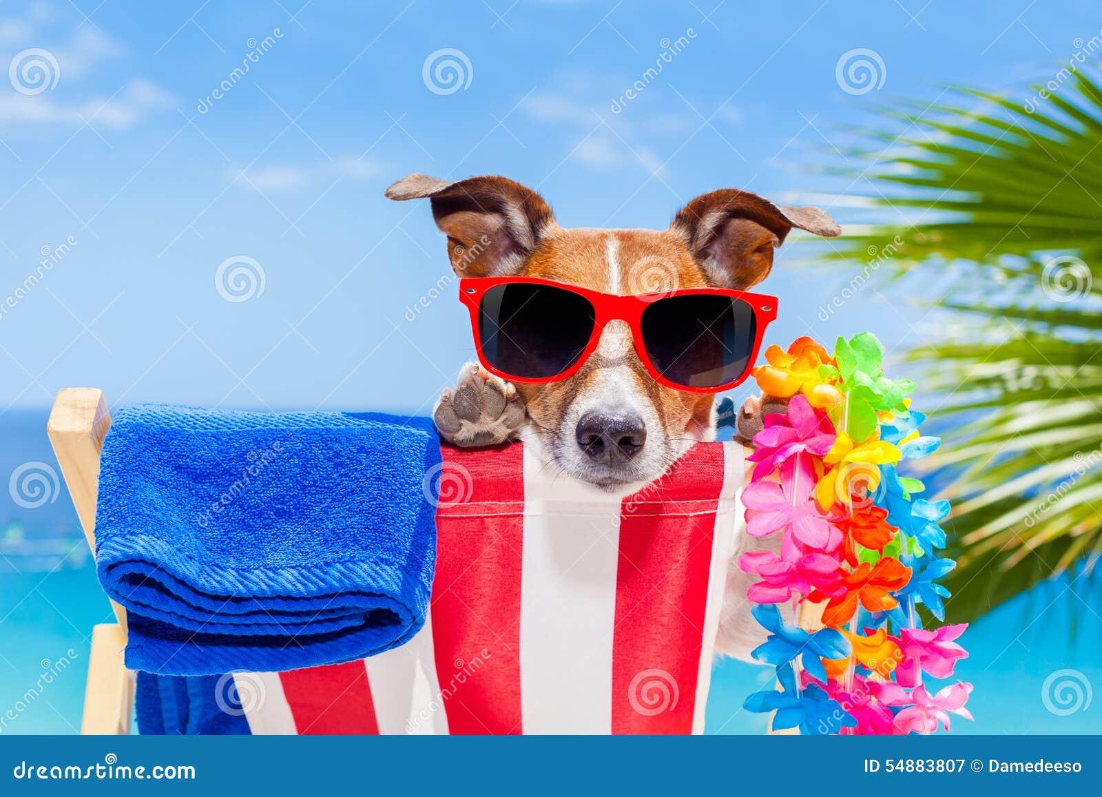 Dog Summer Holiday Vacation Stock Photo Image 54883807