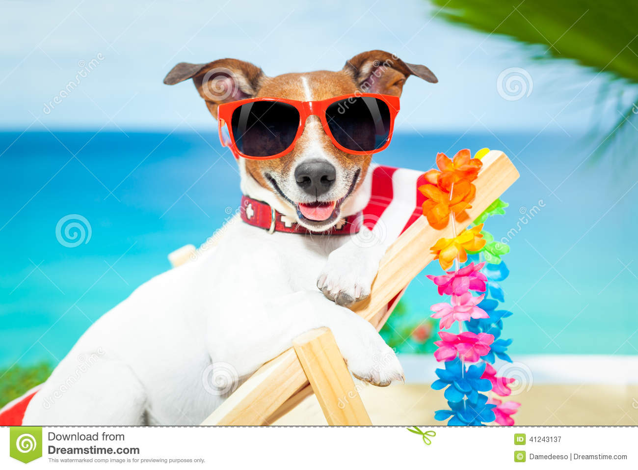 Dog Summer Vacation Stock Photo - Image: 41243137 Relaxing Dogs