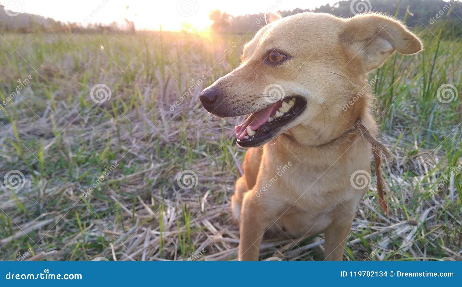 Dog With Sun Set