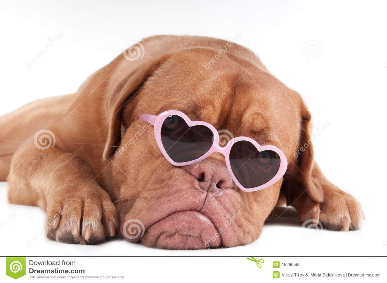 Dog With Sunglasses Royalty Free Stock Images - Image: 15290589