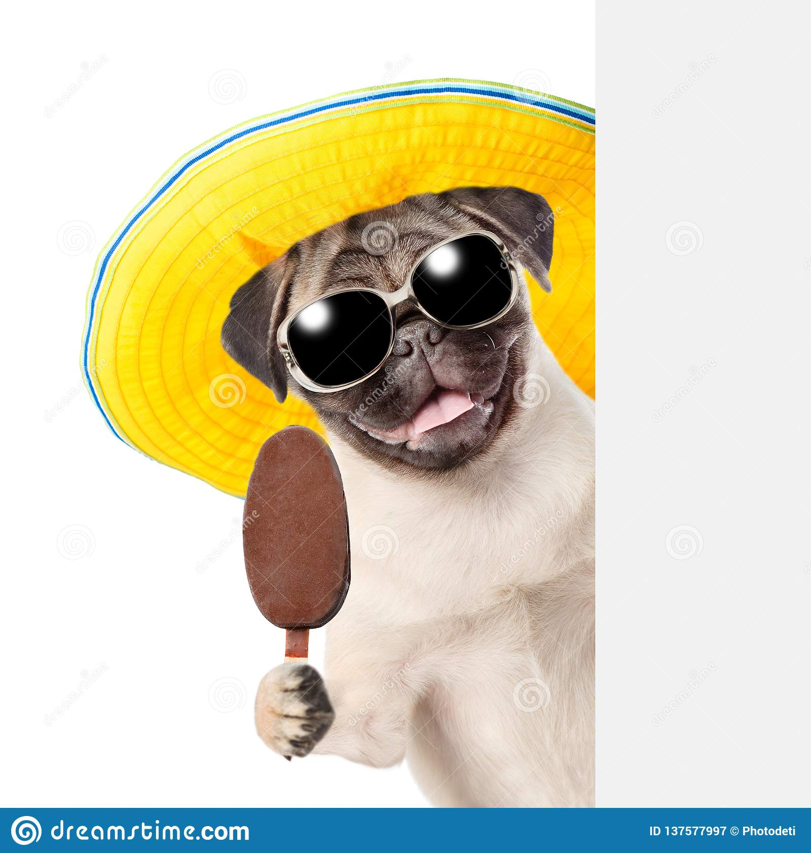 bedaf12e03e5 Dog Sunglasses Hat Stock Images - Download 870 Royalty Free Photos