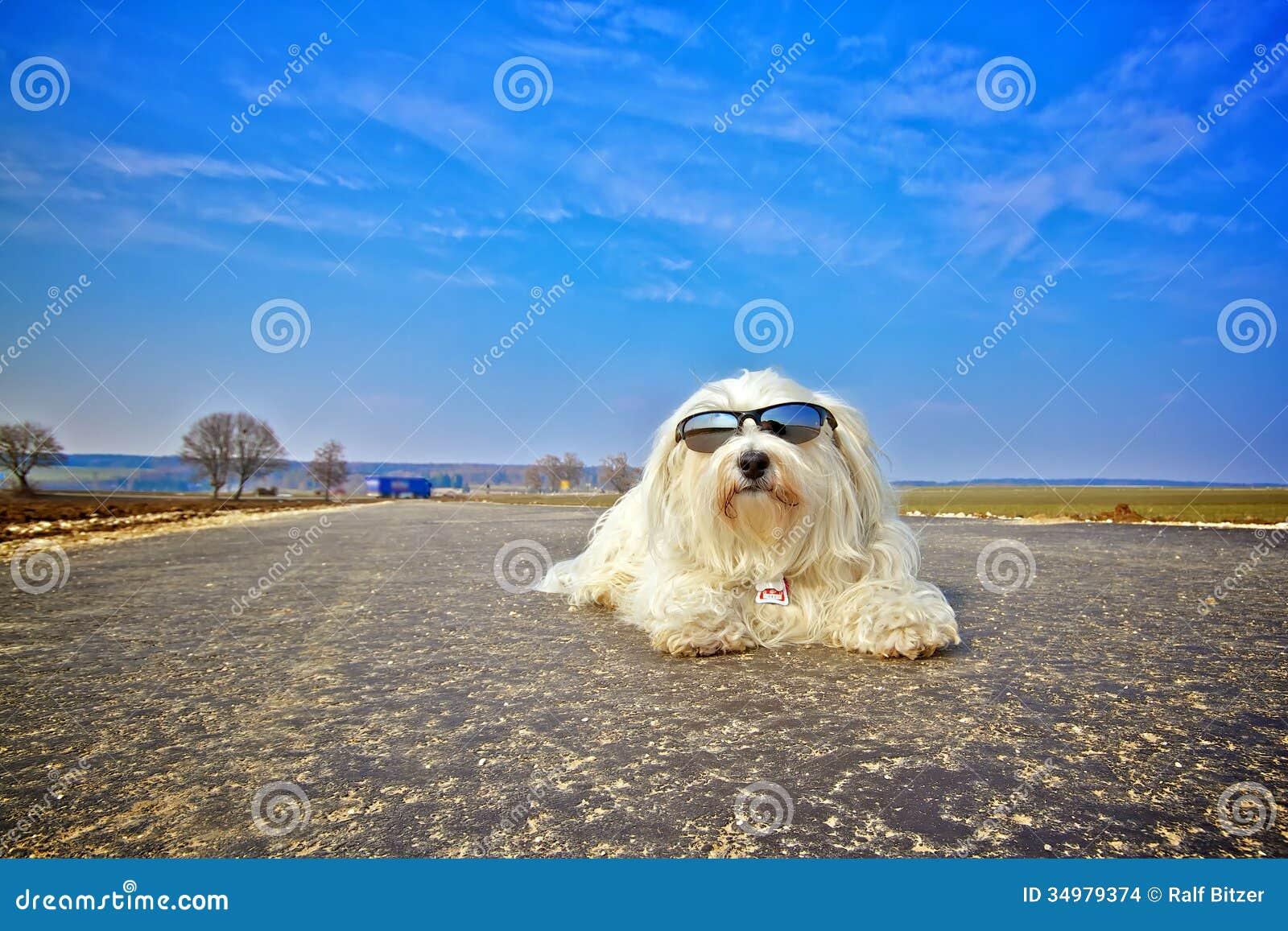 dog photo road - photo #25