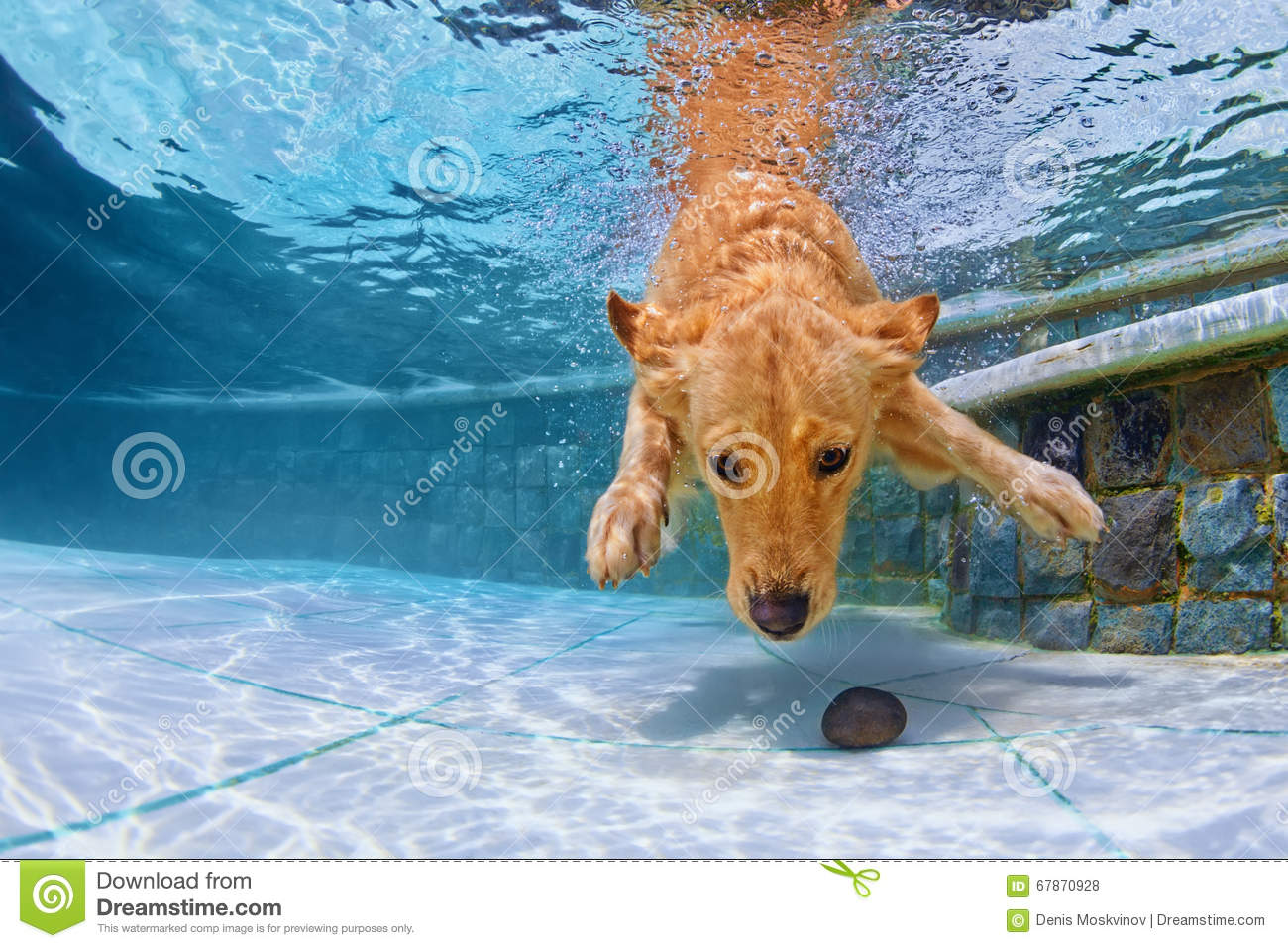 Swimming Dog Royalty Free Stock Photography 42244289
