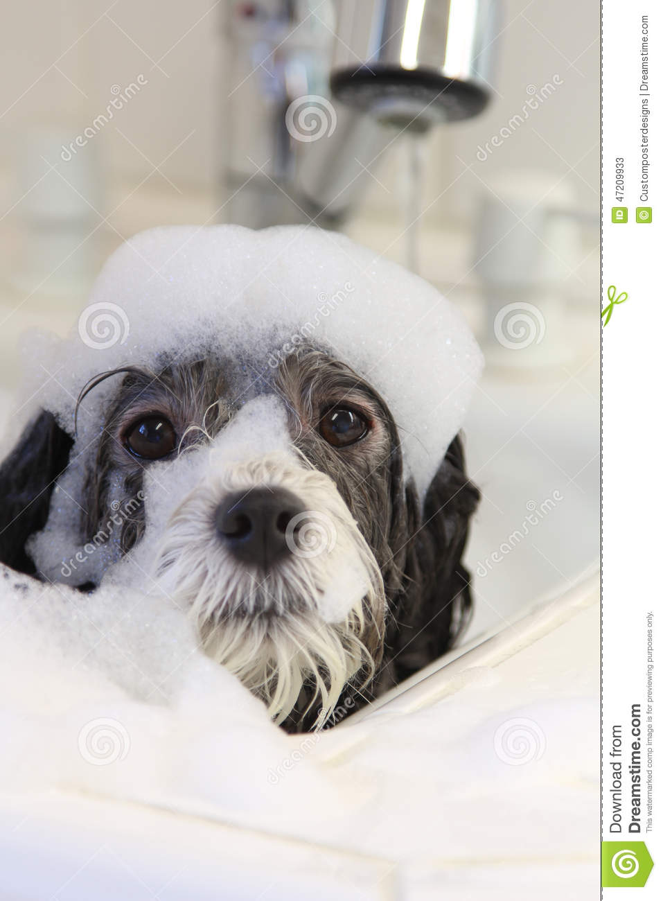 Download A dog taking a bath. stock image. Image of cute, canine - 47209933