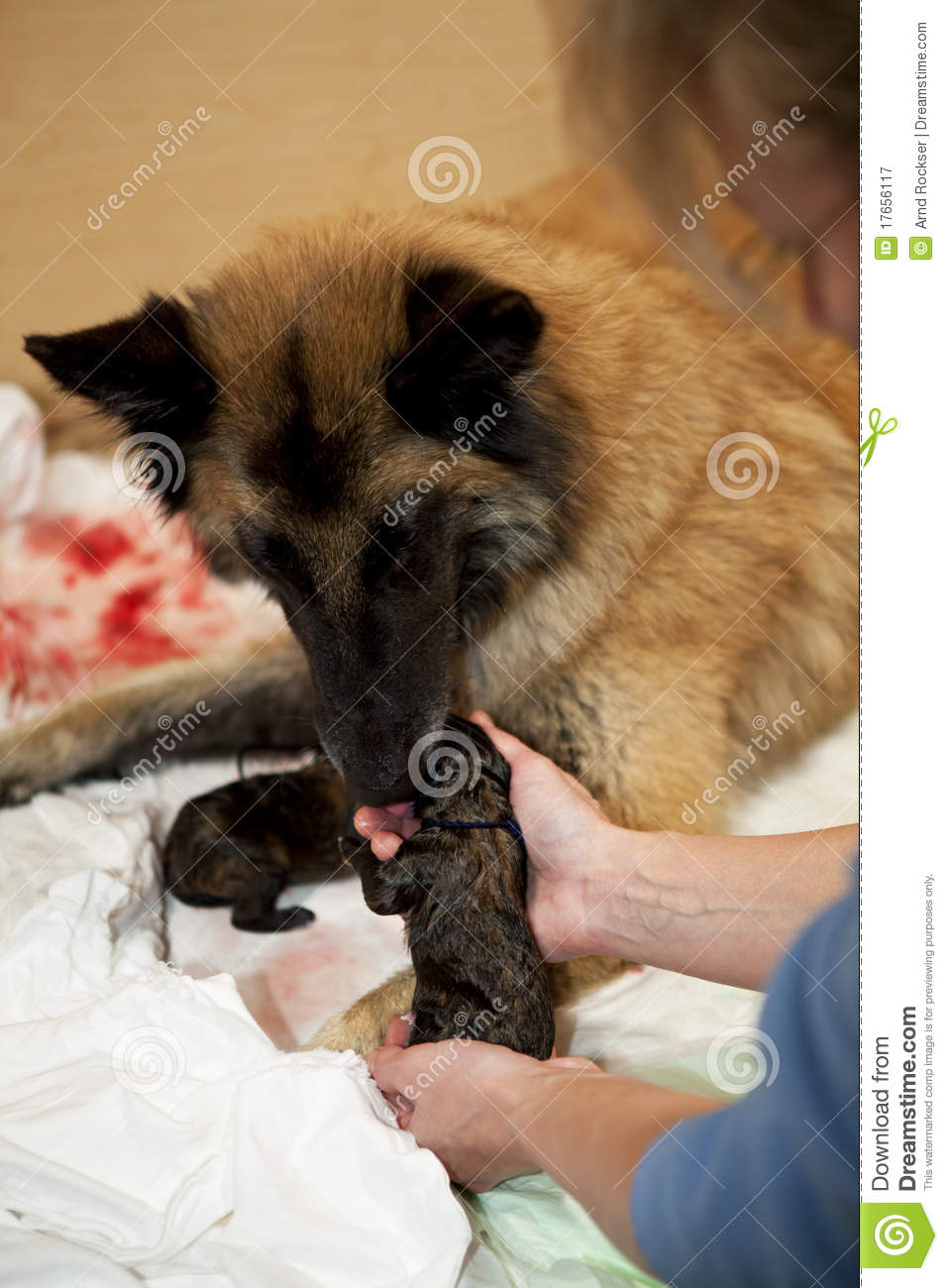 taking care of a puppy Pamper a precious puppy from the pound how to play cute puppy daycare take care of your pup, paying close attention to the meters to keep it happy all day long.