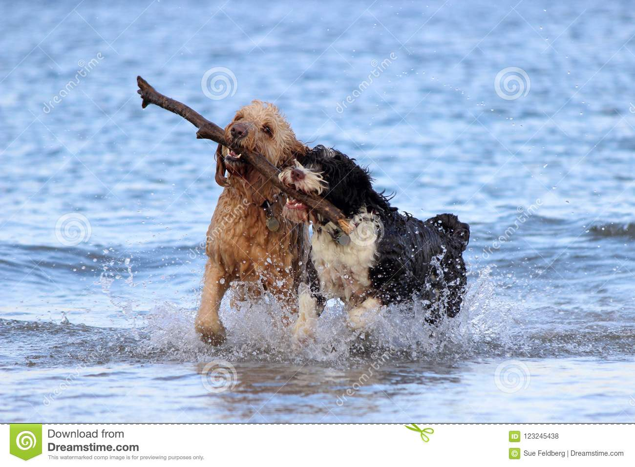Download Dog Teamwork - Fetching A Stick Stock Photo - Image of enjoys, healthy: 123245438